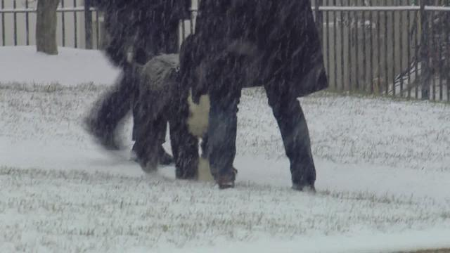Obamas' dog frolics in the snow