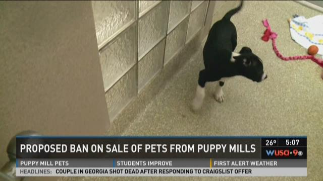 Montgomery Co. council discuss pets from puppy mills ban