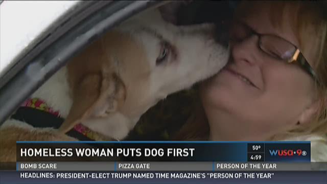 Can Dogs Est Shrimp