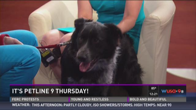 Petline 9: Sully