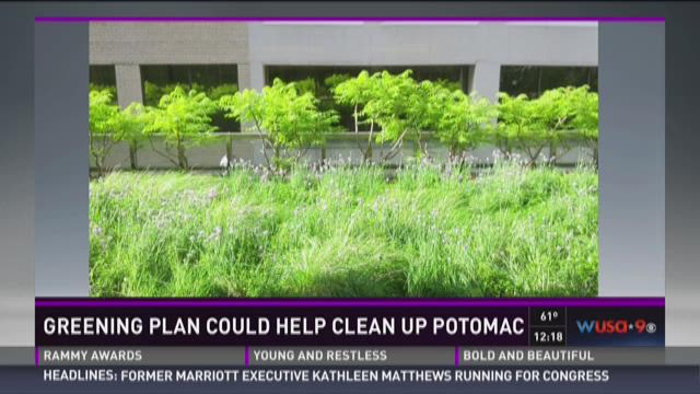 Greening plan could help clean up Potomac