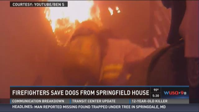 Firefighters save dogs from Springfield house