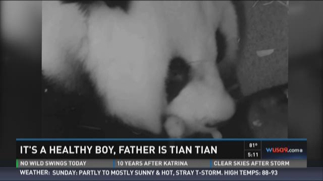 It's a healthy boy, father is Tian Tian