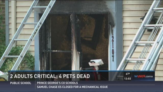 2 adults critical; 4 pets dead